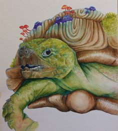 """My tortoise with fungus and barnacles is complete this 9""""x12"""" original watercolor could be up for sale if there's an interest dm me if you're interested  #watercolorpainting #natureart #drawing #sketch #painting #watercolor #mixedmediaart #coloredpencils #artist #fiddleheadfinecrafts #leahmurphy #art #originalartwork #tortoise #artwork #handmade #aquarelle #watercolorart"""