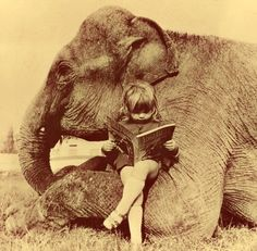 Funny pictures about A little girl and her elephant. Oh, and cool pics about A little girl and her elephant. Also, A little girl and her elephant photos. Elephant Love, Elephant Elephant, White Elephant, Flying Elephant, Vintage Elephant, Baby Elephants, Asian Elephant, Giraffe, Mundo Animal