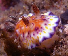 nudibranch   Flickr - Photo Sharing!