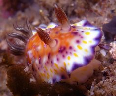 nudibranch | Flickr - Photo Sharing!