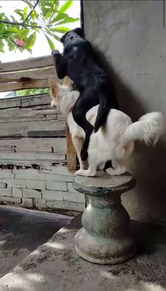 These cute dogs are so interested in the neighbors! Source by destructionbay dog dog memes dog videos videos wallpaper dog memes dog quotes dogs dogs pictures dogs videos puppies puppy video Cute Animal Videos, Funny Animal Pictures, Dog Pictures, Cute Funny Animals, Cute Baby Animals, Clever Animals, Wild Animals, Funny Dog Videos, Funny Dogs