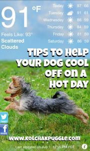 3 Ways to Help Your Dog Cool Off On a Hot Day