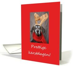 dutch reindeer pointer christmas greeting card Created from an original Studio Porto Sabbia photo! This reindeer pointer christmas greeting is available in different languages. Verse Merry Christmas in the language of your choice