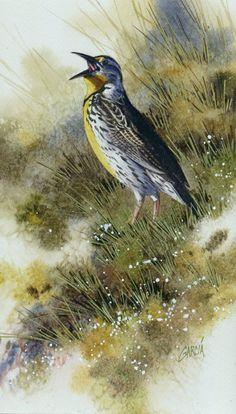 Joe Garcia Artworks Gallery- Watercolor of Western Meadowlark