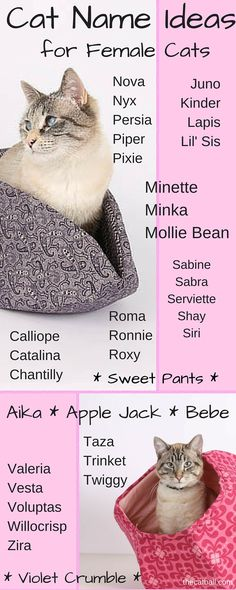 Do you have a new cat, and are you having difficulty naming your kitty? We totally understand! This infographic gives some ideas for naming a female kitty. Is your kitty's name on this list? - Cat name ideas for female cats