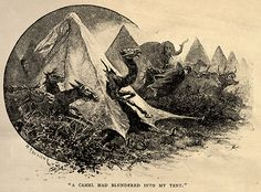 'The Jungle Book' by Rudyard Kipling. Illustrated by John Lockwood Kipling, W.H. Drake and P. Frenzeny. Caption - 'A camel had blundered into my tent.'  http://www.amazon.com/gp/product/1473327814/ref=as_li_tl?ie=UTF8&camp=1789&creative=9325&creativeASIN=1473327814&linkCode=as2&tag=reaboo09-20&linkId=3L6YQIKYY3GHLN3W