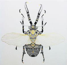 Insecte AM