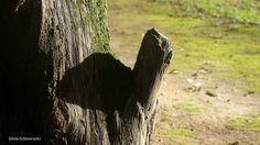 Velho tronco de árvore