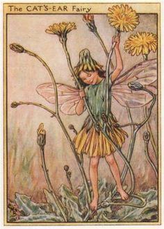 Cat-039-s-Ear-Fairy-by-Cicely-Mary-Barker-Wayside-Flower-Fairies-c1948-old-print