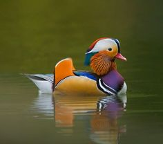 Most beautiful birds in the world
