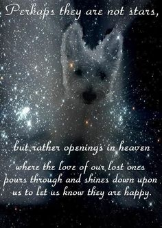 To my beloved Yogi and Bubba!