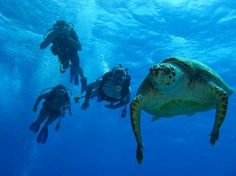 Scuba Diving in Akumal, Enjoy an unforgettable experience