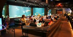 Buy a meal and visit SeaWorld Orlando free during 2020 Magical Dining