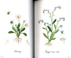 Kazuko Aoki bordado de flores de jardín libro de por pomadour24