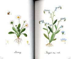Kazuko Aoki bestickt Garten Blumen japanische Craft von pomadour24