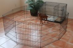 The PTPA Playpen is great for when your puppy has already been potty trained by the PTPA. It easily attaches to your PTPA and gives your puppy/dog more space when you are unable to supervise them. Click here for more details: ModernPuppies.com