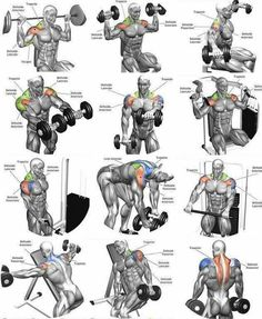 Shoulder Workout Routine To Add Serious Size To Your Shoulders. How To Get The Most Out Of This Shoulder Workout. Full Body Workouts, Full Body Workout Program, Beginner Full Body Workout, Full Body Workout Routine, Muscle Building Workouts, Chest Workouts, Workout Programs, Traps Workout, Gym Workout Tips
