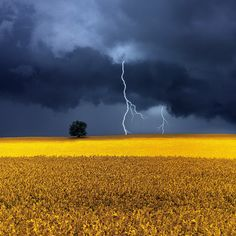 Mother nature's fury: 30 of the most impressive lightning photos i've ever seen Storm Clouds, Sky And Clouds, Landscape Photography, Nature Photography, Lightning Photography, Rapeseed Field, Lightning Photos, Canola Field, Guache