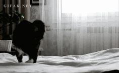 Who the fuck knows… | The Best Cat GIF Post In The History Of Cat GIFs
