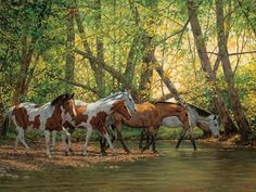 Shady Creek Horses 500 Piece Puzzle