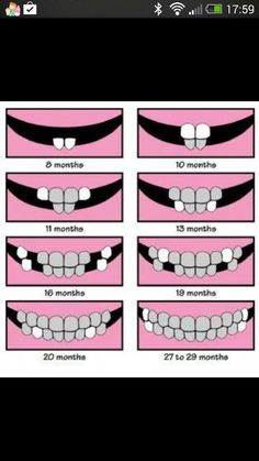 Finally nd easy to read tooth chart.
