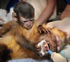 (via United People- Stop Animal Testing & Vivisection on Facebook)