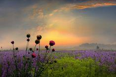 landscape-flowers-sunrise
