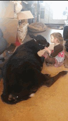 After Sneaking It Into Her House, This Little Girl Cuddles With Her Baby Cow And It's Adorable. Luckily for little Miss Brennan, once her mom saw the love between cow and girl, it was impossible to be mad. Pet Cows, Baby Cows, Farm Animals, Funny Animals, Cute Animals, Girls Cuddling, Show Cattle, All Gods Creatures, Beautiful Creatures