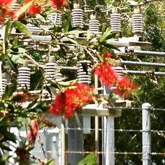 The electrifying grid with beautiful bottle brush tree. Bottle Brush Trees, Grid, Interior Design, Plants, Beautiful, Nest Design, Home Interior Design, Interior Designing, Home Decor