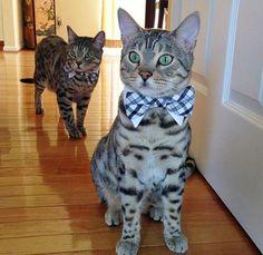 Pictures of beautiful cats (imagens de gatos lindos)