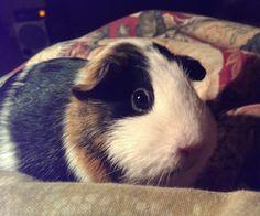 My precious Daisy. I miss her terribly.