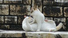 Greek cats frolicking in the sun