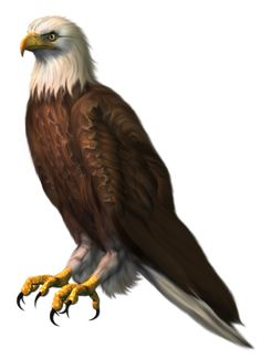 Eagle Hawk Kite Bird PNG Image With Transparent Background - Photo - Creative Soorma Eagle Background, Blur Image Background, Desktop Background Pictures, Background Images For Editing, Light Background Images, Tiger Artwork, Eagle Wallpaper, Photoshop, Dove Pictures