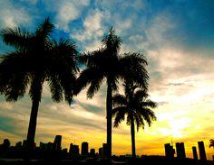 Miami, Skyline
