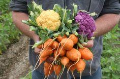 Guide to storing Garden Vegetables: http://www.gardenguides.com/419-storing-vegetables.html