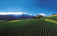 Mont Rochelle Hotel and Mountain Vineyards, Cape Winelands, Franschhoek - South Africa Safari Provinces Of South Africa, South Africa Safari, South African Wine, Day Tours, Cape Town, Beautiful Places, Wonderful Places, Vineyard, Scenery