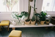 low white shelving for plants