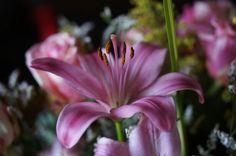 Gorgeous Flowers, Plants, Plant, Royal Icing Flowers, Flower, Florals, Floral, Planets, Blossoms