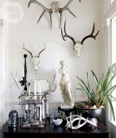 collections antlers
