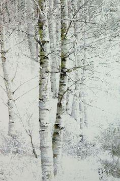 김종원 Kim, Jong-Won Watercolor Landscape, Landscape Art, Landscape Paintings, Watercolor Paintings, Birch Tree Art, White Birch Trees, Painting Snow, Winter Painting, Aspen Trees