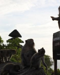 Watch out for monkeys at Uluwatu Temple, they are known for being mischievous. #Jetsetter  http://www.jetsetter.com/trips/indonesia/indonesia/2909/bali-and-lombok-for-two?nm=serplist=7=image