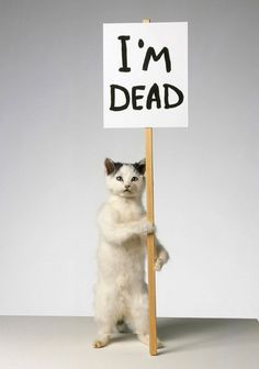 David Shrigley Cat