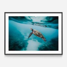 Make a statement in any room with this framed poster, printed on thick, durable, matte paper. The matte black frame that's made from wood from renewable forests adds an extra touch of class. A framed, enhanced giclée matte poster. This Animal Canvas Frame, Canvas Wall Art, Framed Prints, Art Prints, Animal Prints, Sea Turtle Art, Large Artwork, Coastal Wall Art, Paper Frames