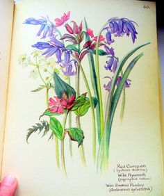 Beautiful flowers.  http://www.rosettabooks.com/book/the-country-diary-of-an-edwardian-lady/