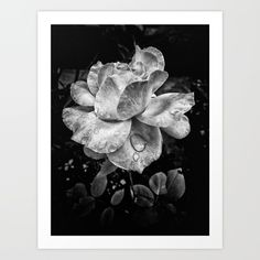 Rose petals with raindrops by Silvia Ganora #society6 #prints #wallart #homedecor #rose #blackandwhite