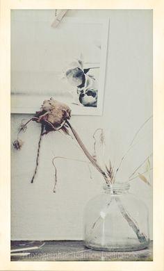 Roses d'automne par Béatrice Lechtanski