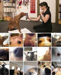 How to teach your dog to take a selfie! It's easier than you think. :D