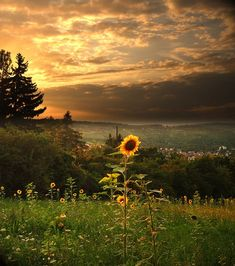gorgeous sunflower against an awesome autumn sky and beautiful valley