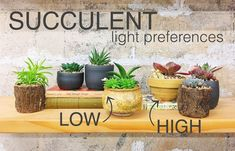 Ever wonder why your succulents are dying? They have different light preferences! Better care for your succulents by learning the difference between high vs low light succulents and keep your plants alive longer.