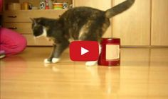 A great video showing how skilful and quick to learn a kitty can be.